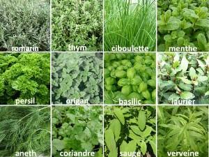 herbes-aromatiques-01